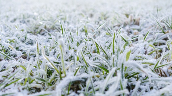 3 Ways To Keep Your Lawn Healthy This Winter