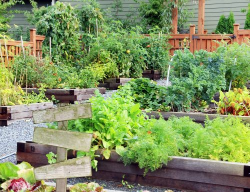 4 Easy Vegetables to Grow in Your Garden