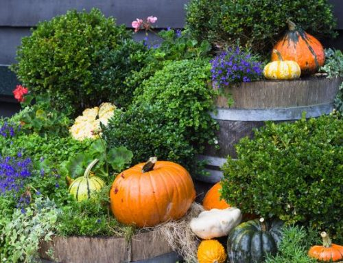 4 Fall Plant Additions to Add to Your Home