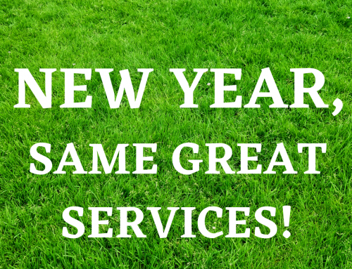 New Year, New Lawn!