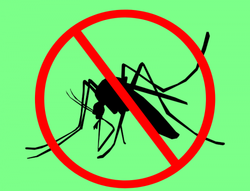 Check Out Our Mosquito Control Services!