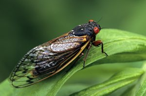 Cicada, Creative Scapes Landscaping