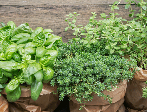 6 Easy Herbs to Grow!