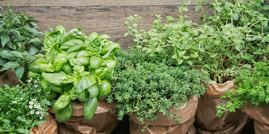 Creative Scapes Herbs