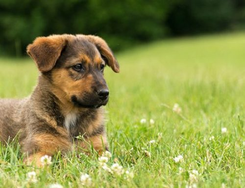 Avoid These 5 Poisonous Plants for Dogs!