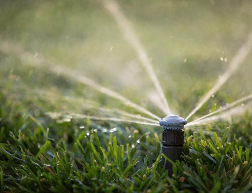 The Importance of Irrigation!